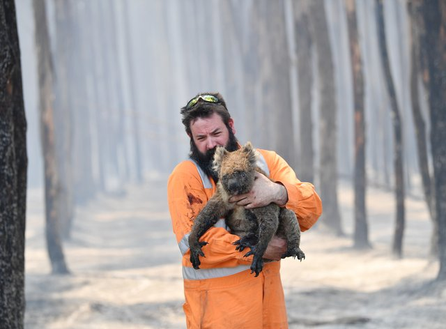 Thousands of animals have been caught up in the bushfires, including koalas and kangaroos (PA Images)