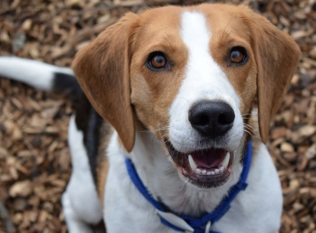 Bailey, one of around 100 animals facing an indefinite stay at Battersea Dogs and Cats Home