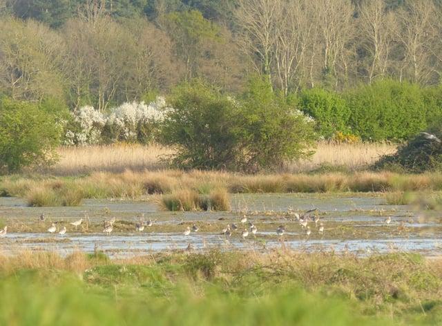 Curlew wading at Wild Ken Hill (Wild Ken Hill/PA)