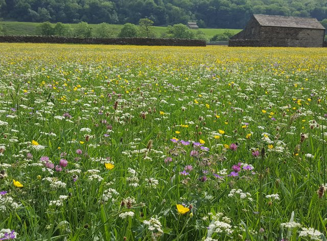 Funding could go to schemes to restore wildflower meadows