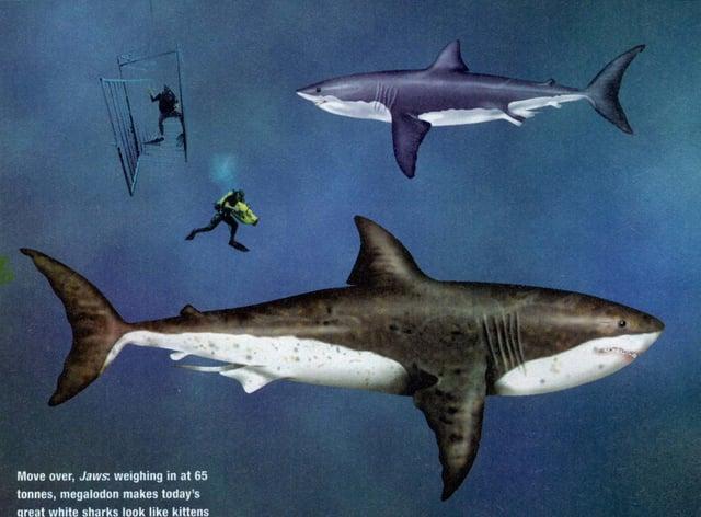 Shark/Megalodon