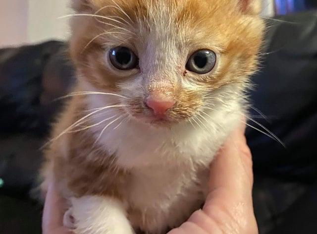Fab paw: four-week-old kitten named after Beatle John Lennon