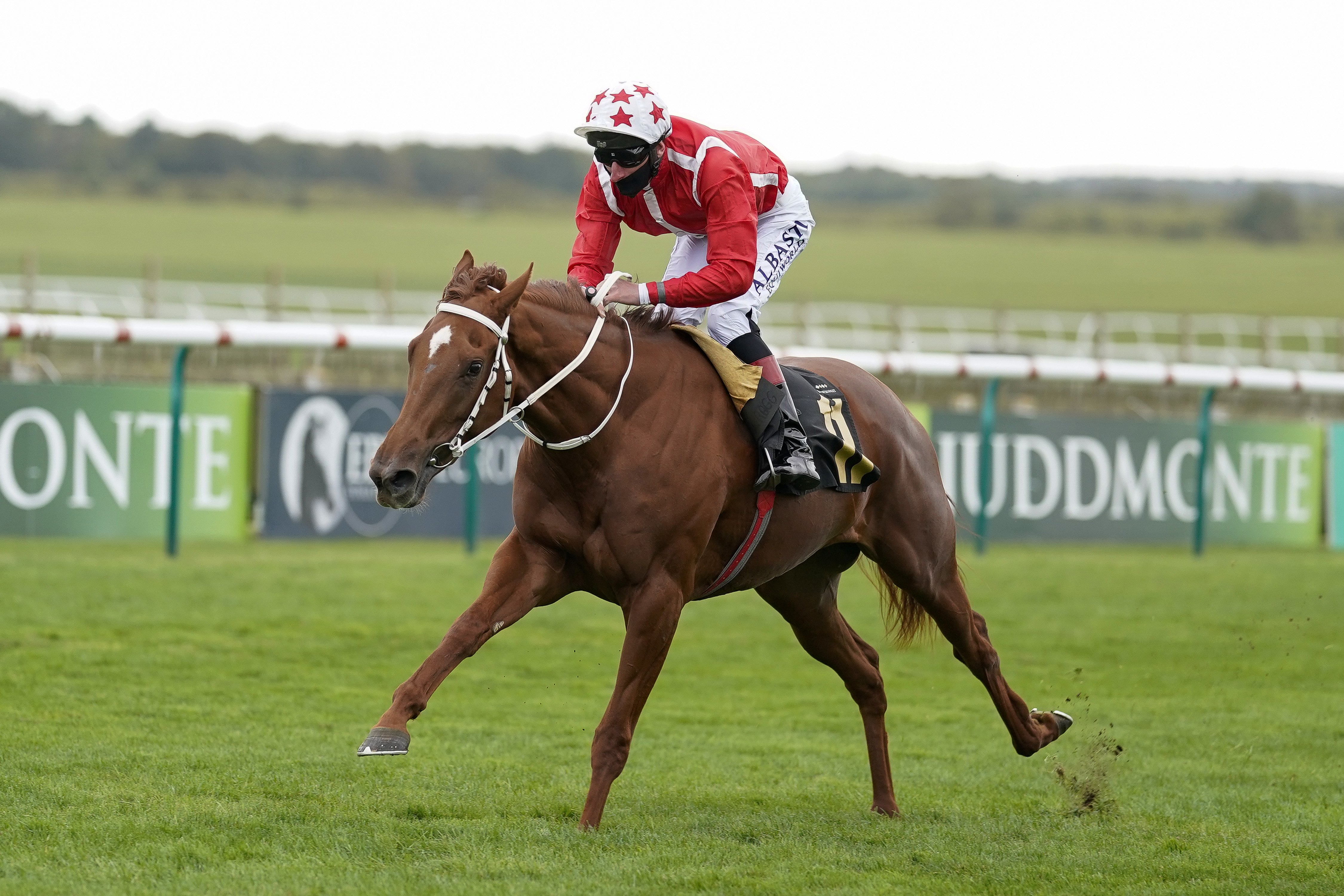 Saffron Beach will sit out Breeders' Cup