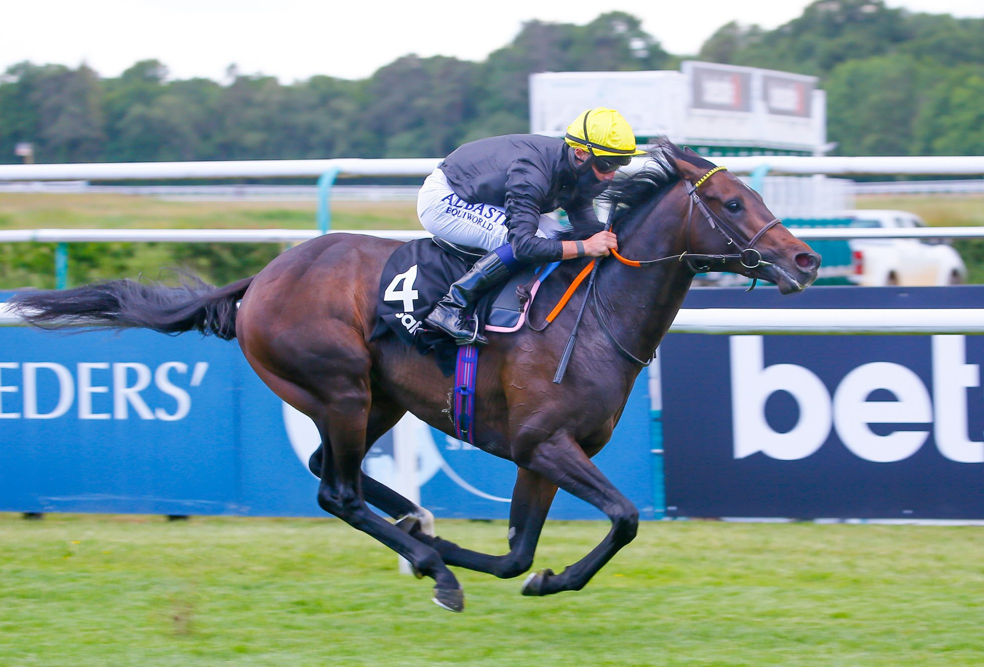English King bound for Australia after record-breaking sale