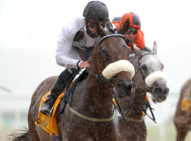 Judicial will be back in action at Lingfield