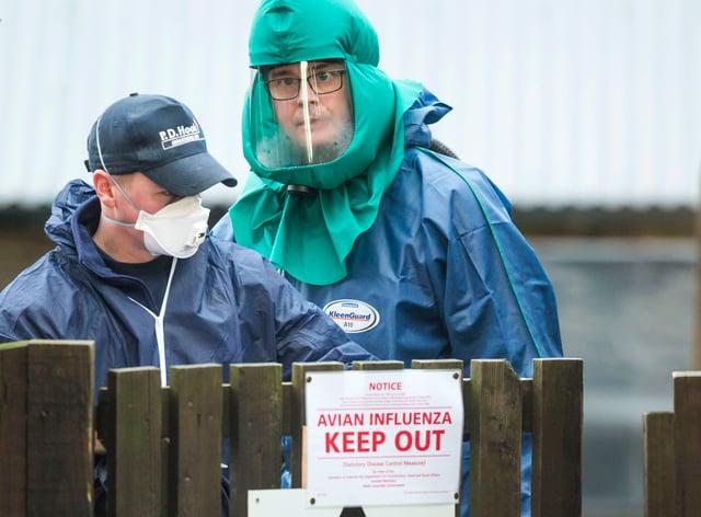 Suspected case of bird flu