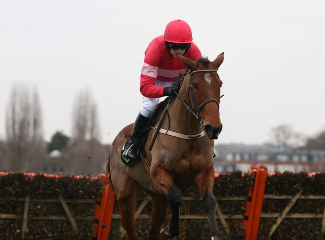 Laurina is expected to make her first start for Paul Nicholls in the Coral Hurdle at Ascot on Saturday