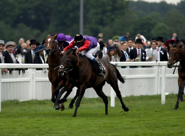 Almodovar (right) seen finishing third at Royal Ascot in 2016