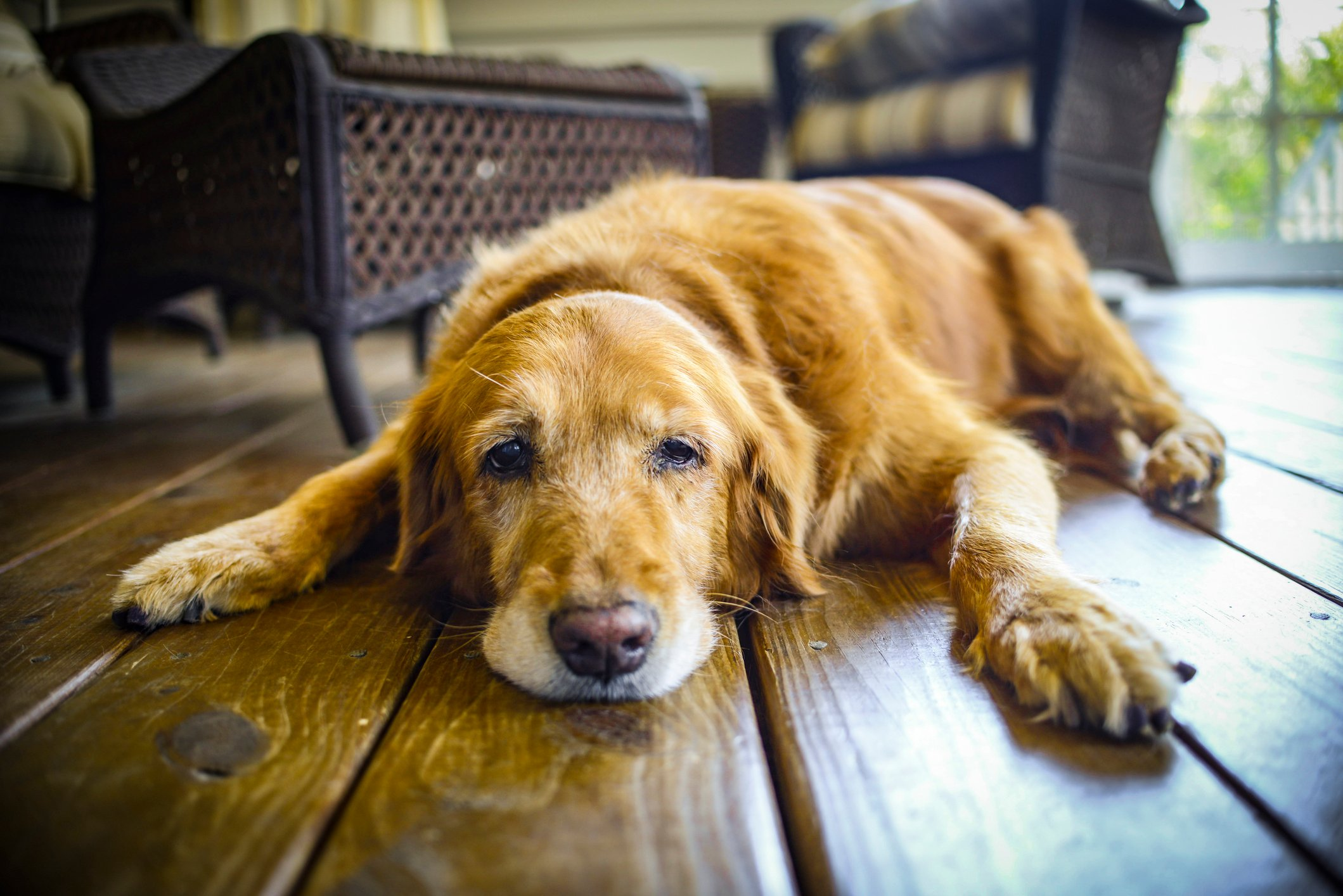 7 things you should never say to someone grieving the loss of a pet