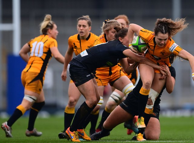 <p>Wasps will have fans back</p>