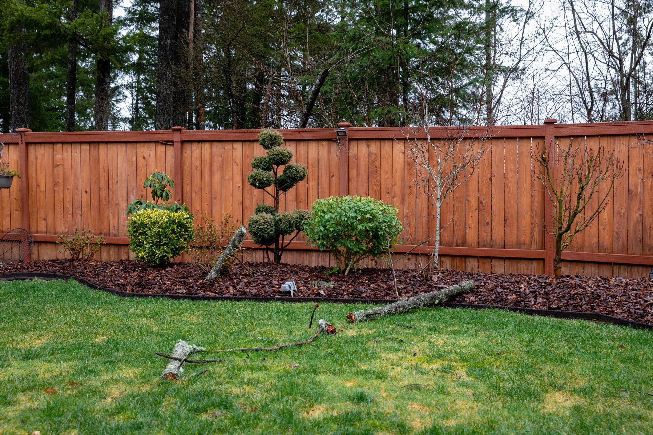 How to storm-proof your garden