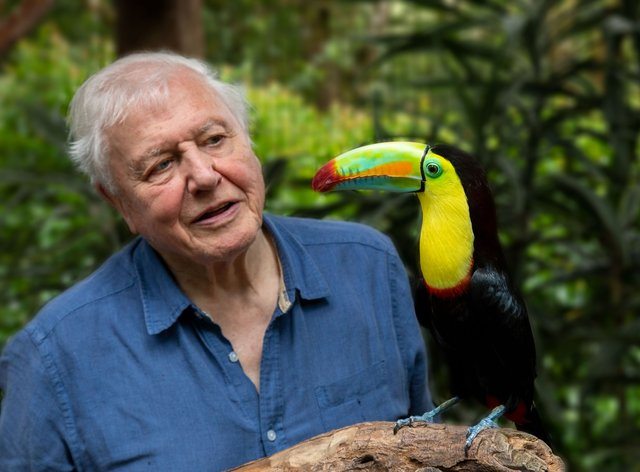 Sir David Attenborough with a toucan in Costa Rica (BBC/PA)