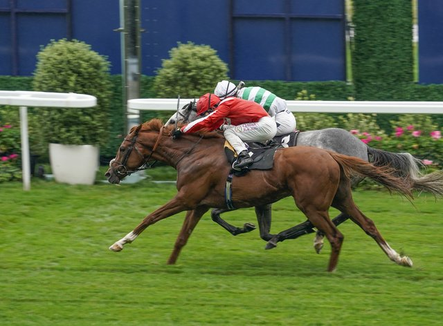 Berkshire Rocco (red) has the Dubai Sheema Classic as a possible target