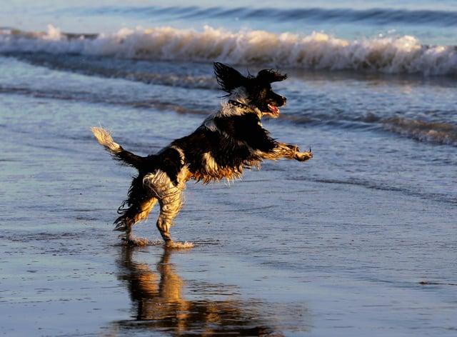 A dog plays on the beach