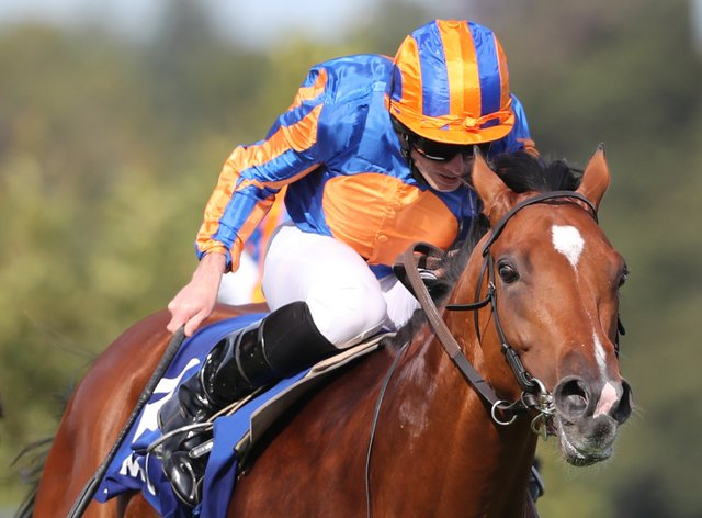 Mogul in action at Leopardstown