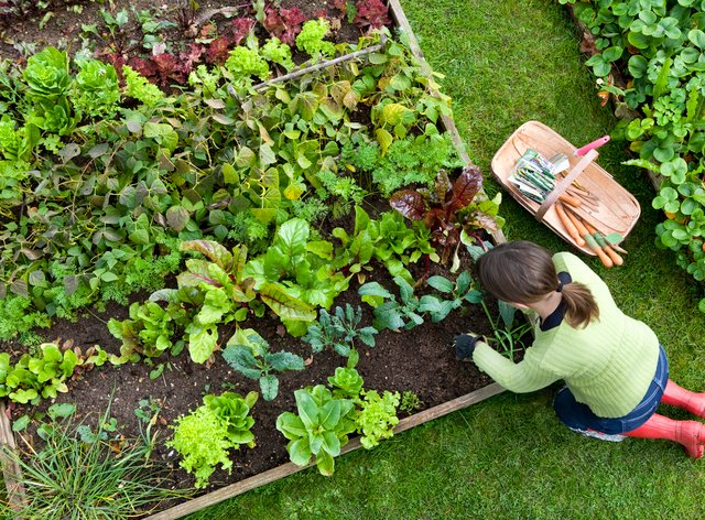 woman gardening at a raised bed