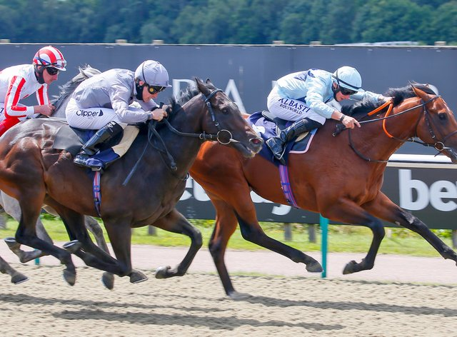 Starman could start his 2021 sprint campaign at York in May