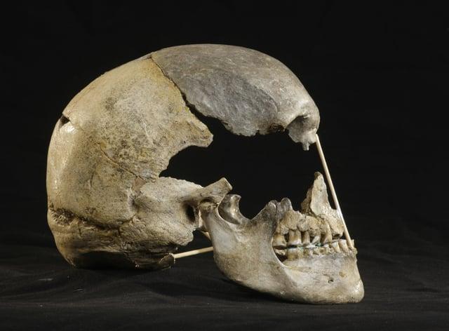 Zlaty kun skull