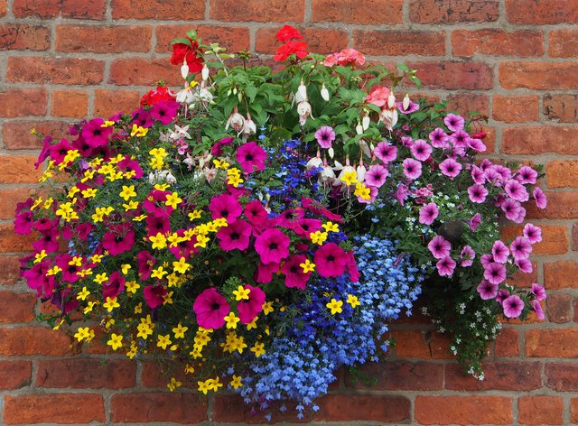 A hanging basket full of flowers (Alamy/PA)