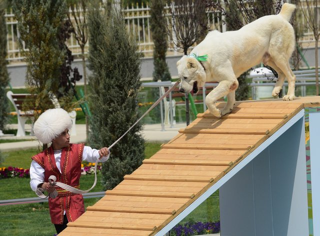 A man dressed in a national costume performs with his border guard shepherd dog Alabay during Dog Day celebration in Ashgabat, Turkmenistan. (AP Photo)