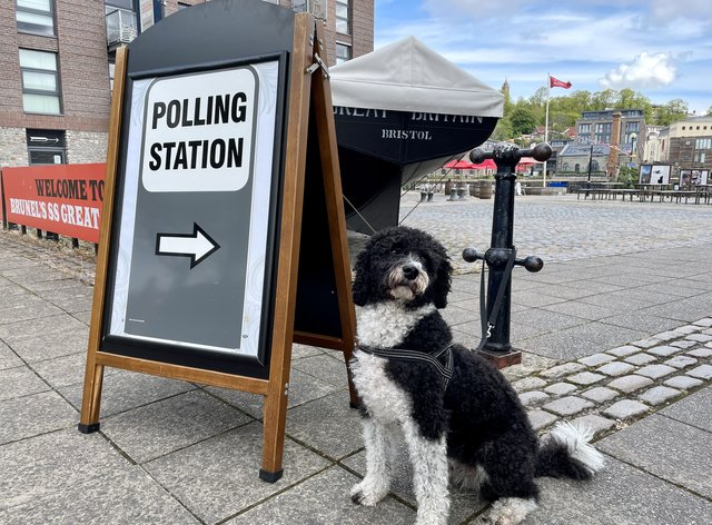 Dogs in polling stations