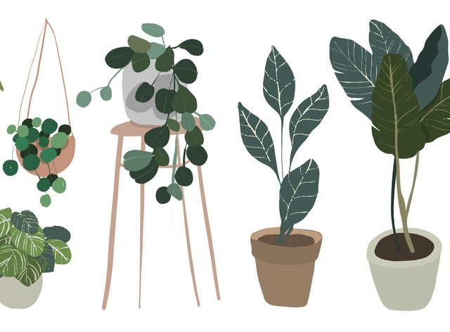 Set of indoor plants in pots. Illustration