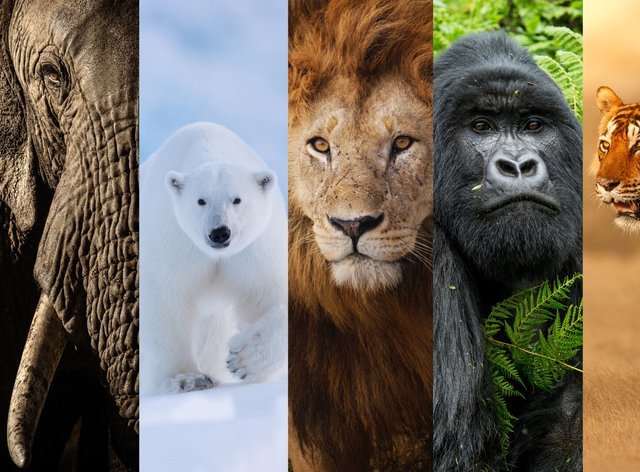 The New Big Five animals chosen by wildlife lovers around the world have been revealed (New Big 5/PA)