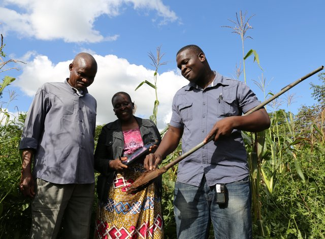 Taking a soil sample from a maize field at Chitedze Research Station, Lilongwe, Malawi