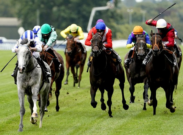 Dark Shift (grey) has had the Pavers Foundation Catherine Memorial Sprint Handicap as his target for some time