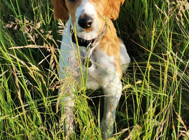 Vets have reported a rise in parvovirus in dogs in the past year