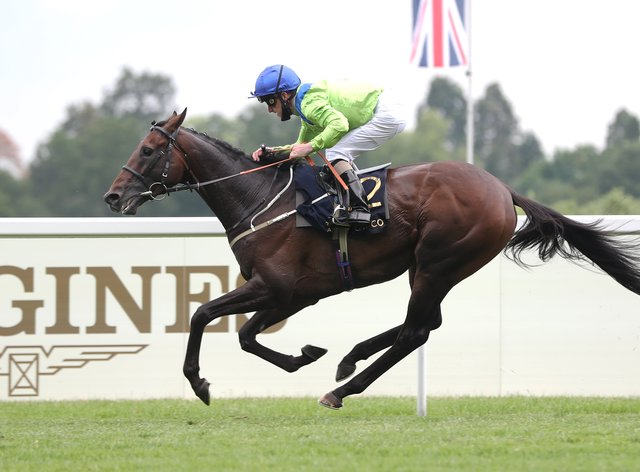 <p>Subjectivist comes home alone in the Gold Cup</p>