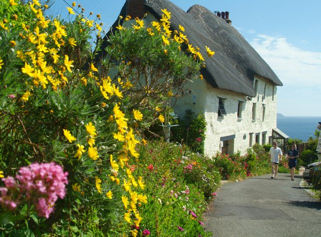 Flowers growing by a seaside cottage