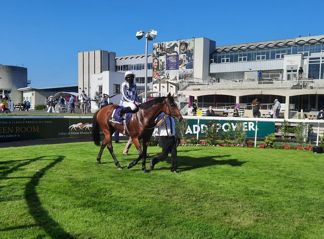 Japan returns following his Meld Stakes win