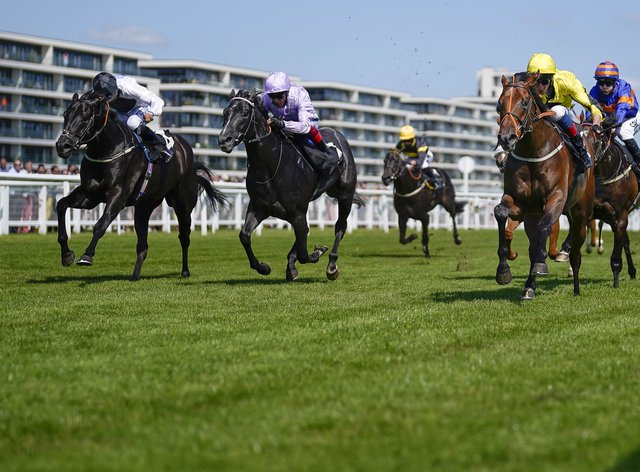 Caturra (yellow) claimed Listed honours at Newbury