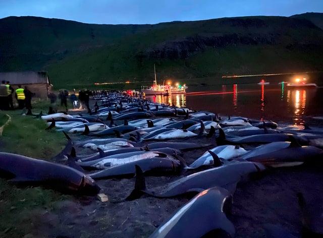 Dead white-sided dolphins lay on a beach (Sea Shepherd via AP)