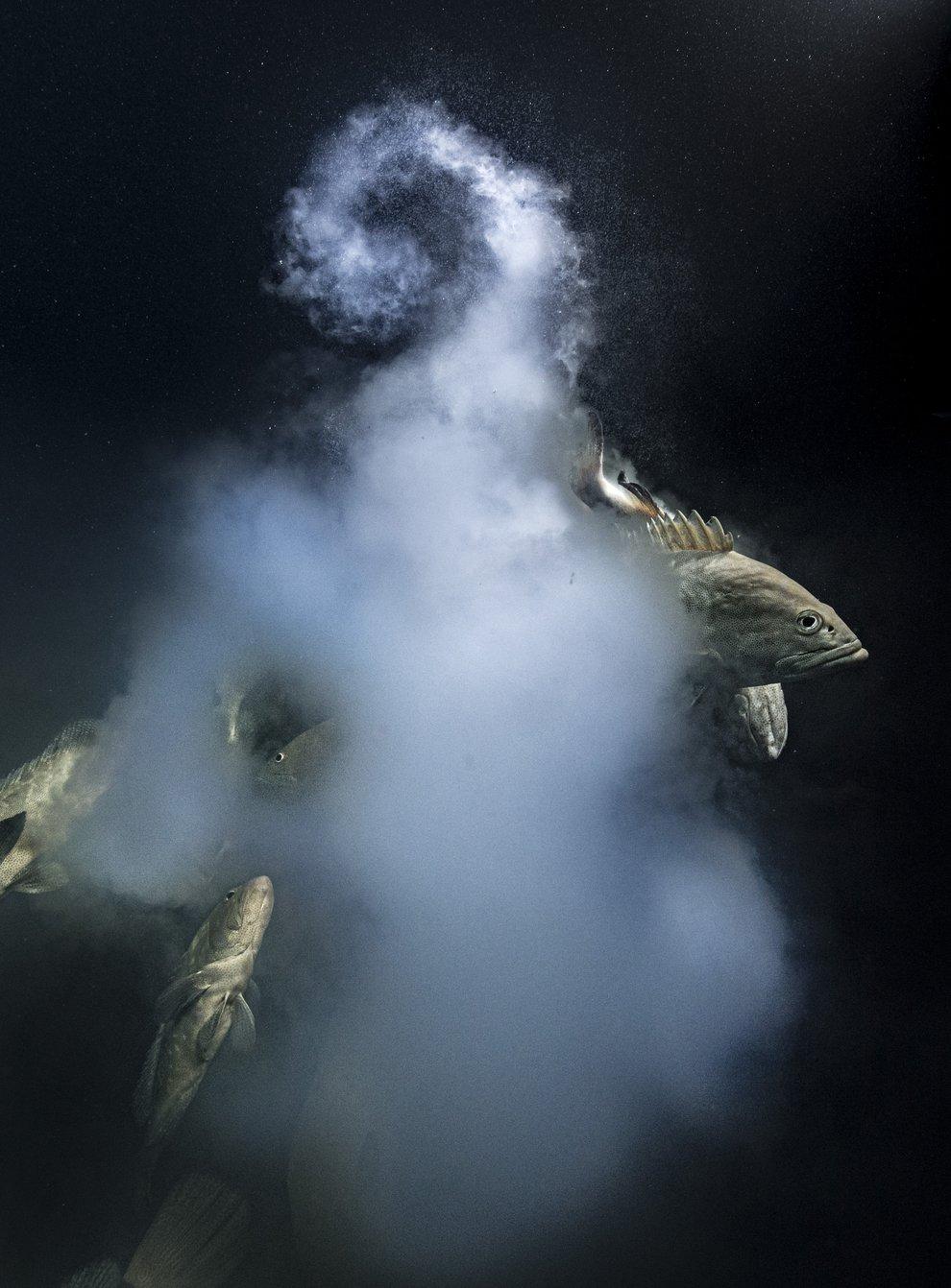 (Laurent Ballesta/Wildlife Photographer of the Year)